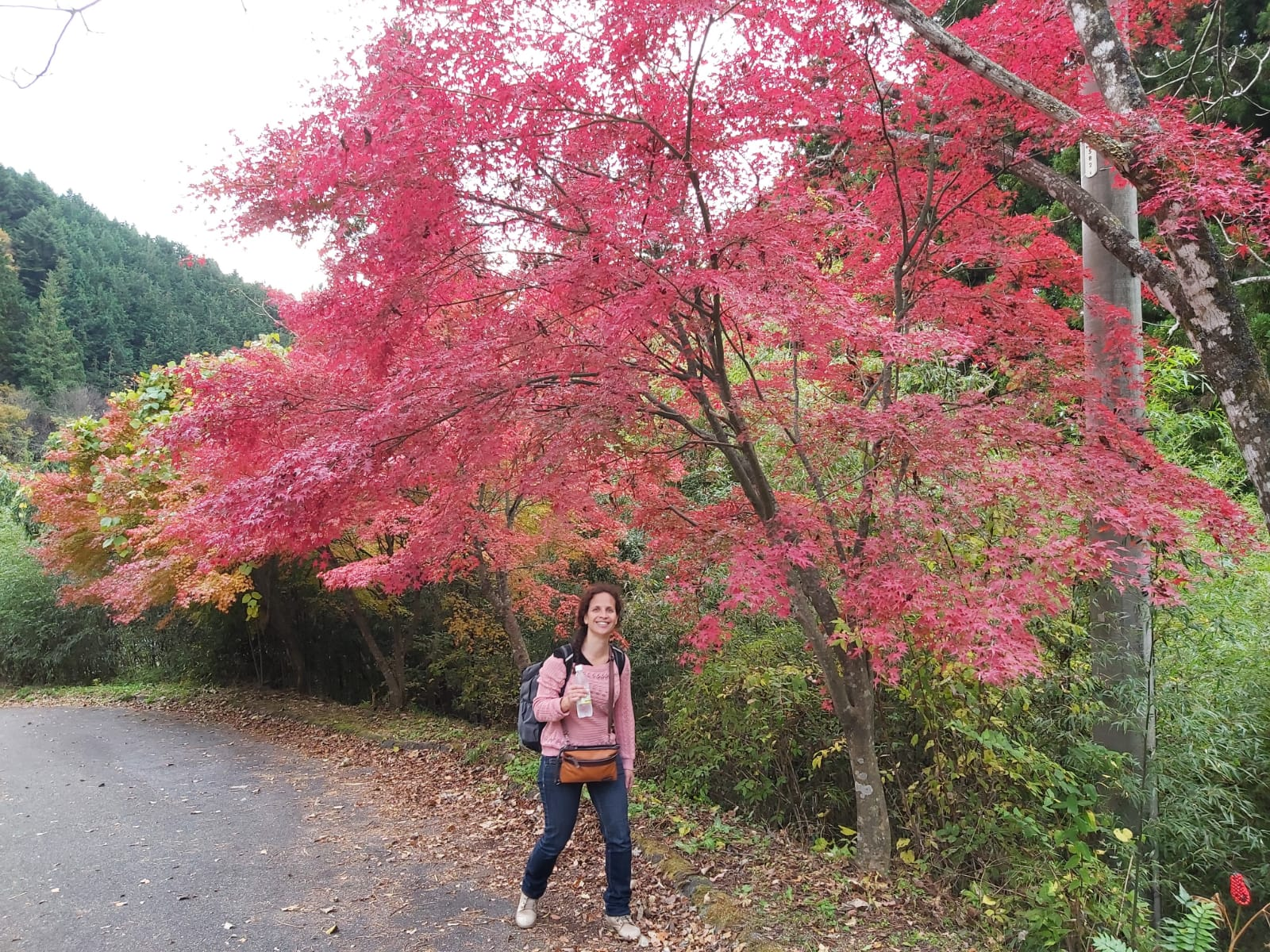 nakadendo-autumn-colors