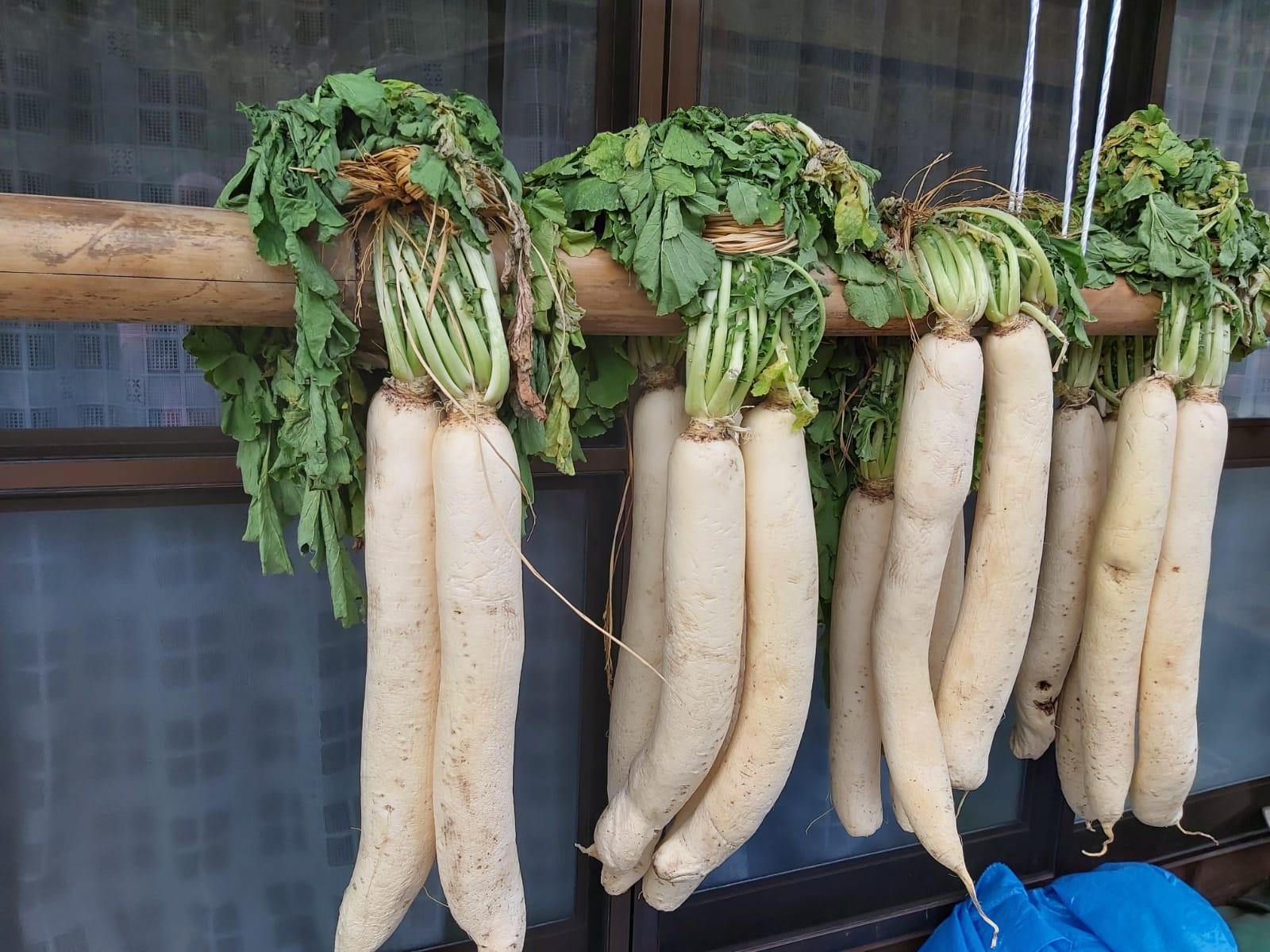 nakasendo-dried-daikon